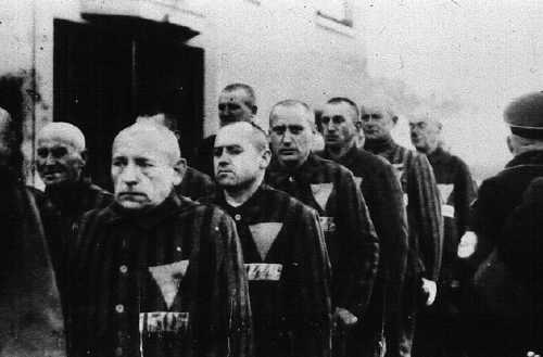Gay inmates. Sachsenhausen prisoners, wearing uniforms with pink badges, ...